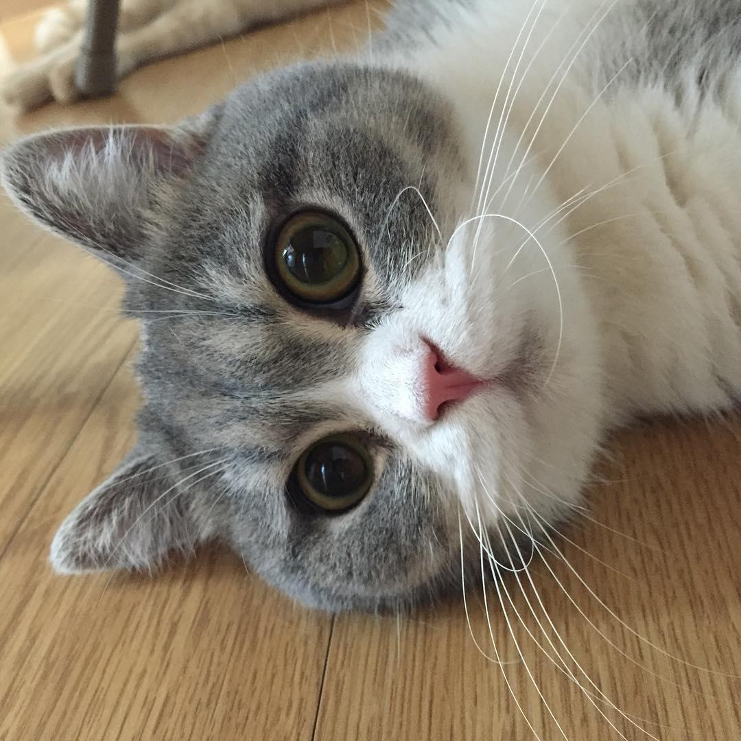 Kucing Lucu GIF JPEG TheProject