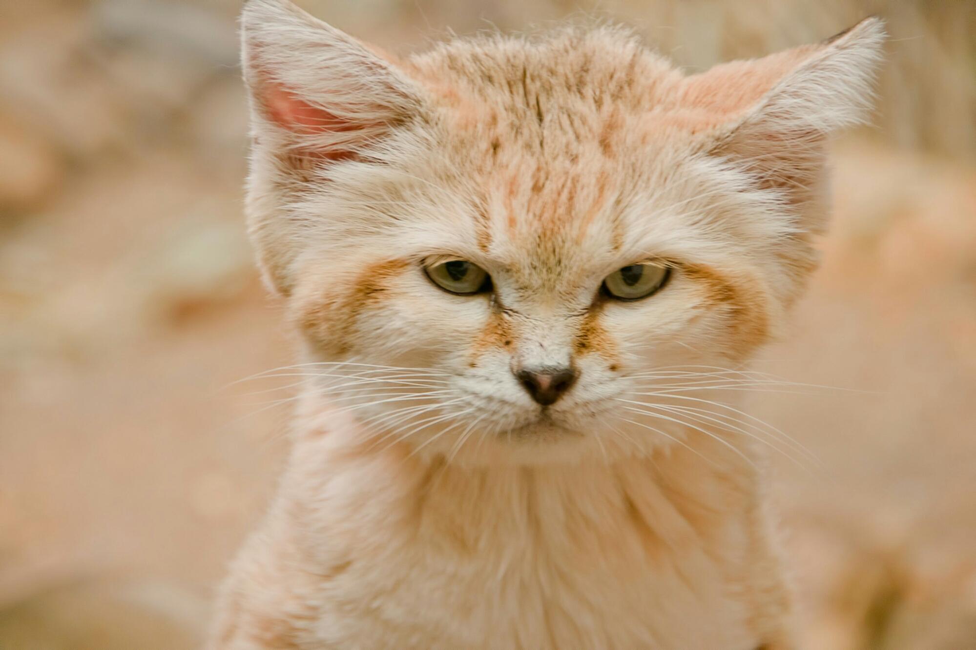 Kucing Lucu GIF TheProject