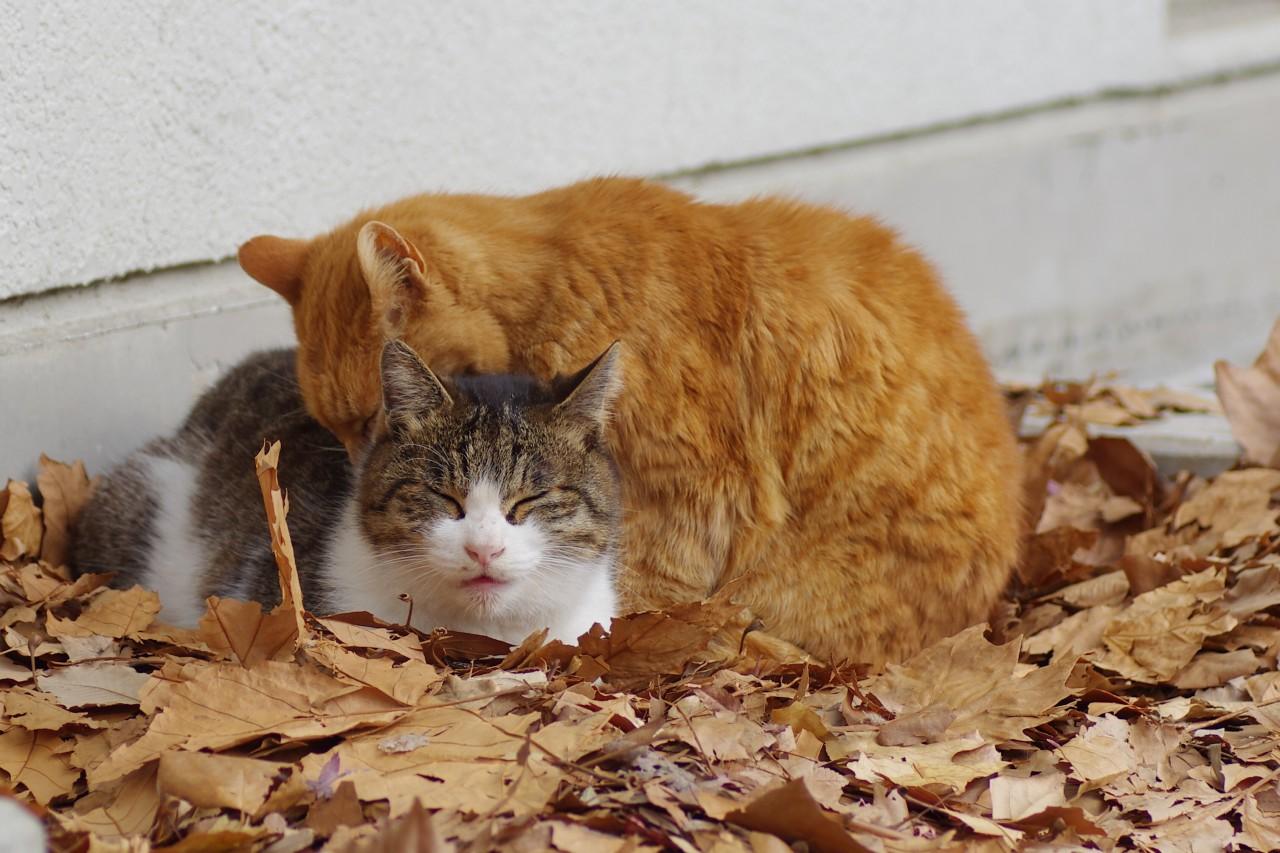 Kucing Kampung TheProject