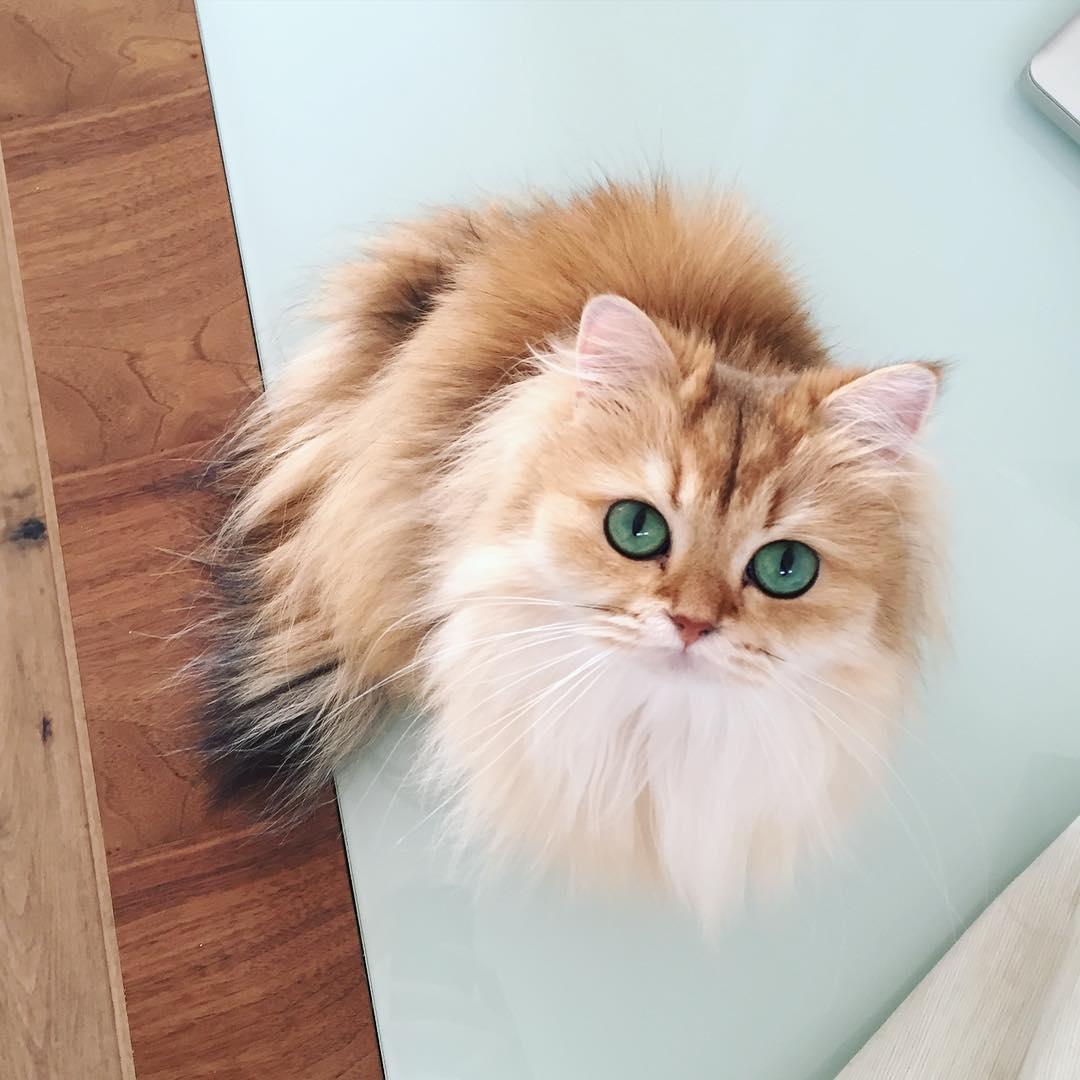 Kucing Cantik TheProject