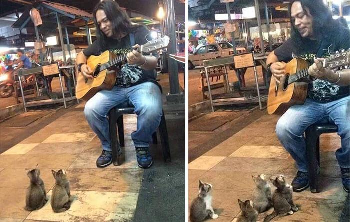 Lucuny Ketika Ada Pemusik Jalanan Beraksi 4 Kitten