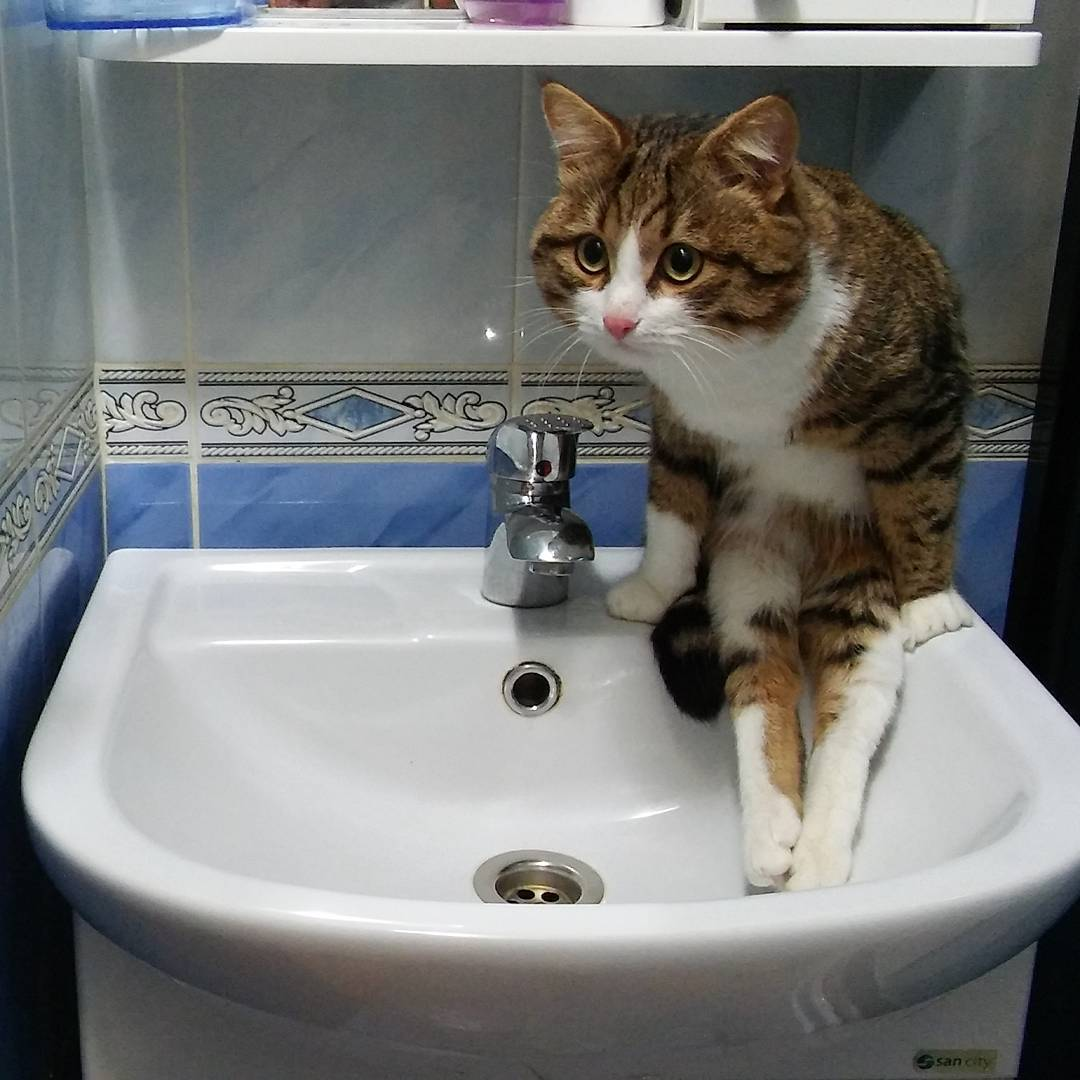 2 Perawatan Kucing TheProject Laman 3