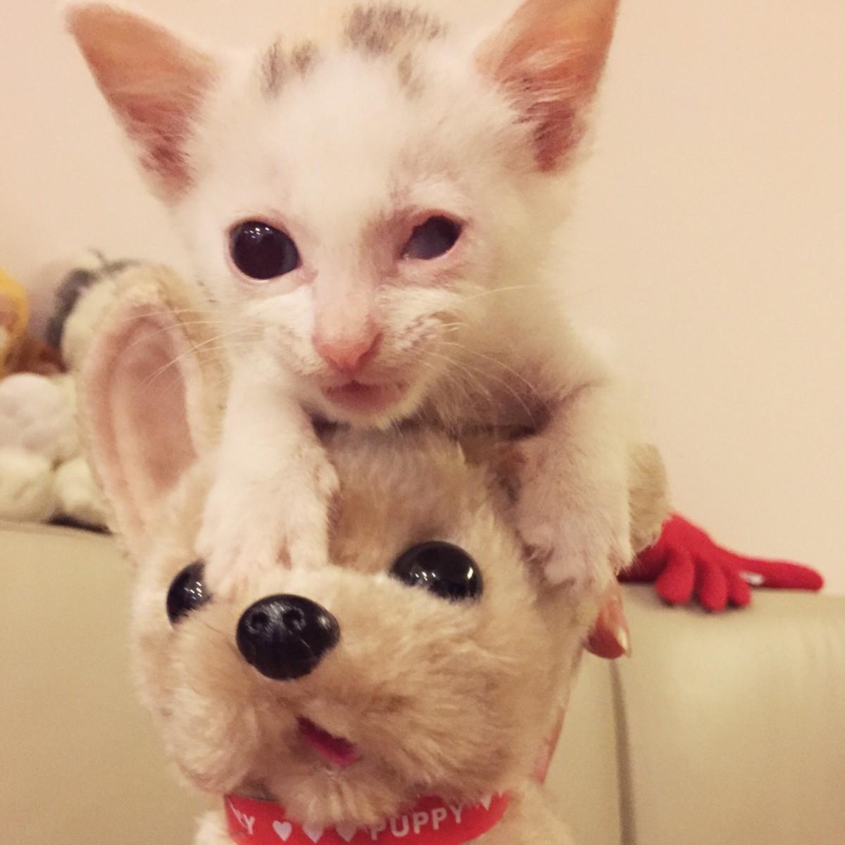 Kisah Kucing Jalan Endeavor