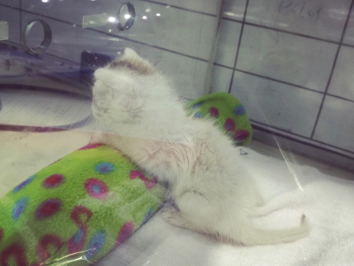 Kisah Kucing Jalan TheProject