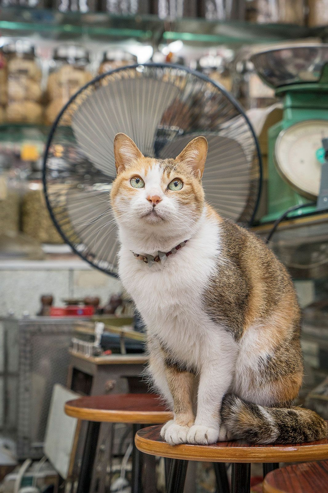 1 Tentang Kucing TheProject Laman 9
