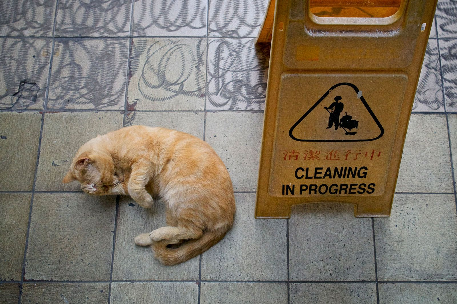0 Cats Care TheProject Laman 11