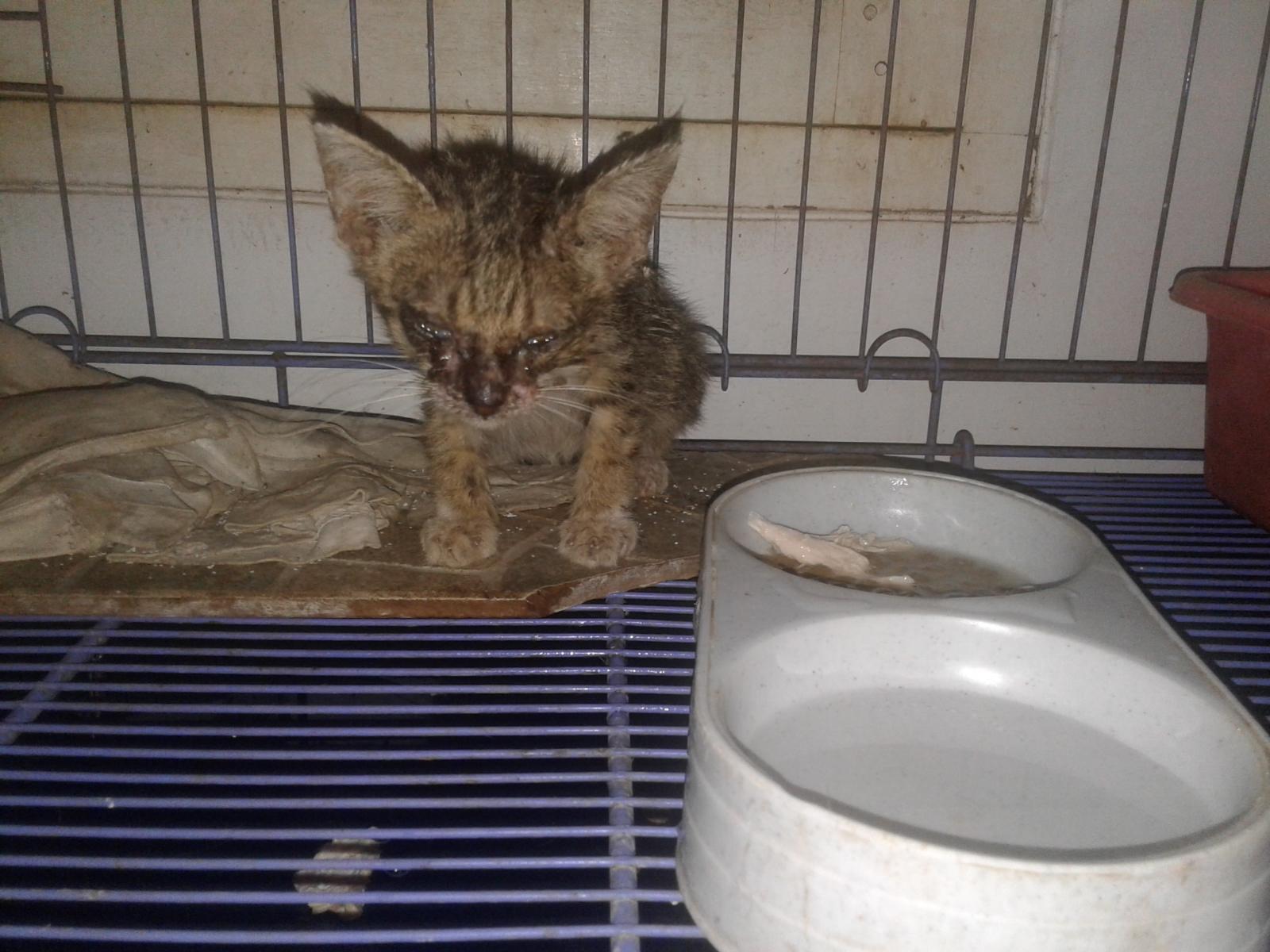 Pengalaman Merawat Kucing Liar Kampung TheProject