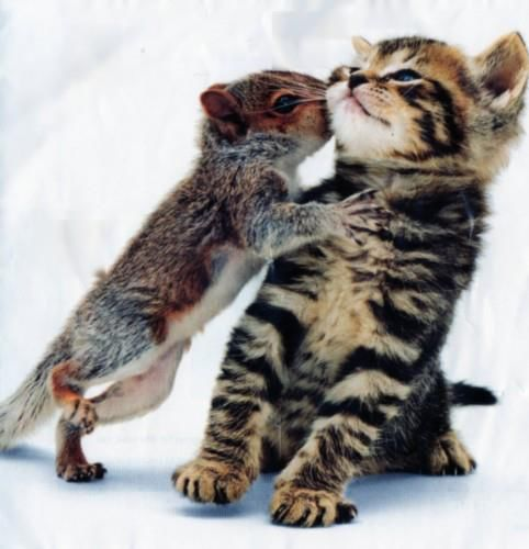 169879-Squirrel-Kissing-A-Kitten
