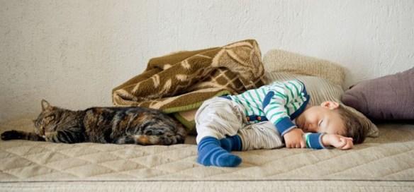 Anak-dan-Kucing