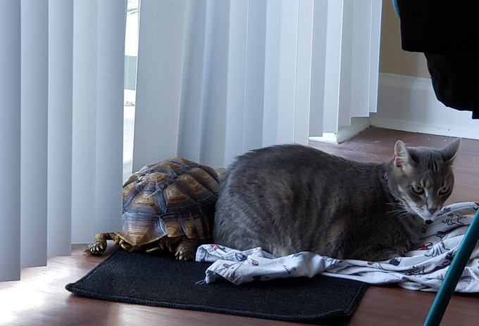 cat and turtle 2