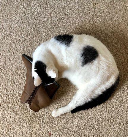 Cat boot